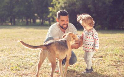 Pappapermisjon, hund og hundebur